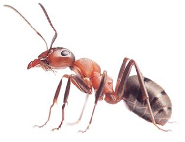 spring pests pest control