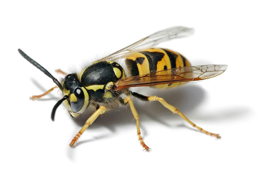 pest control resolutions