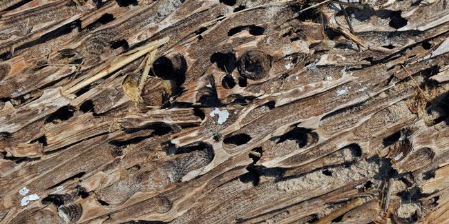 termite-damage-nc