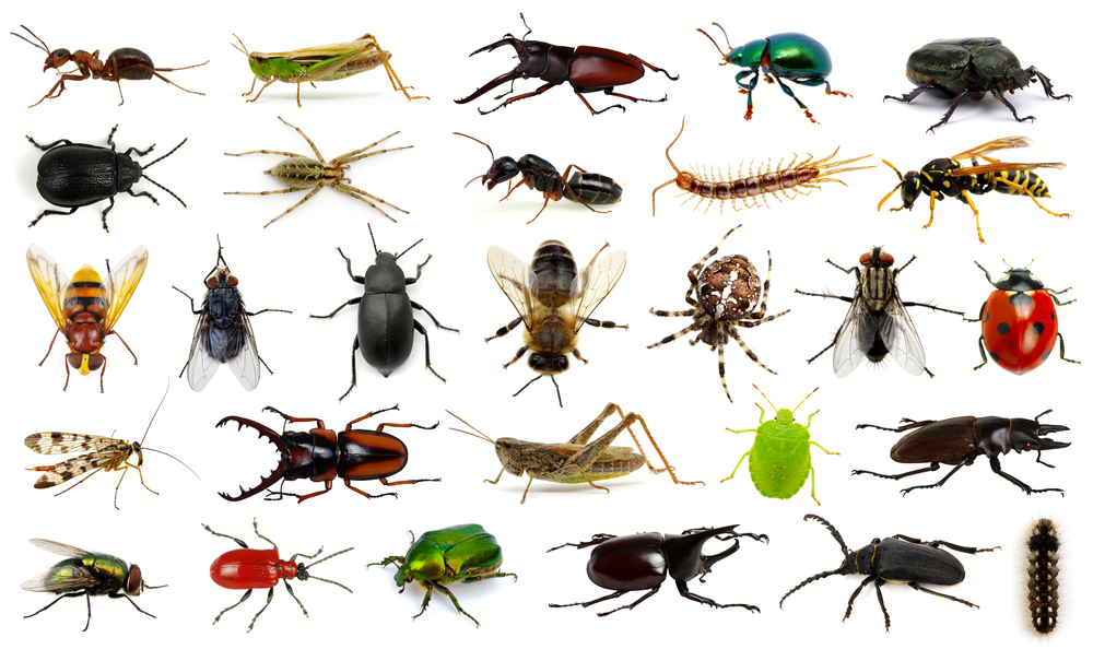 winter invaders pest control
