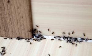 Do I need pest control in the winter in Tennessee?
