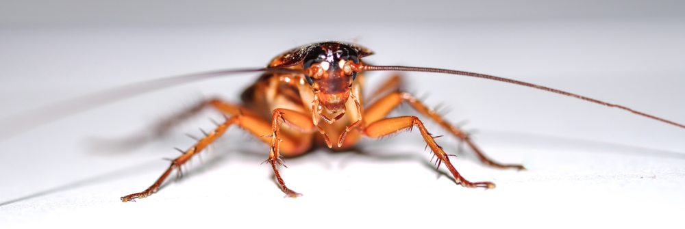 Will cockroaches go away in the winter in Charlotte NC?