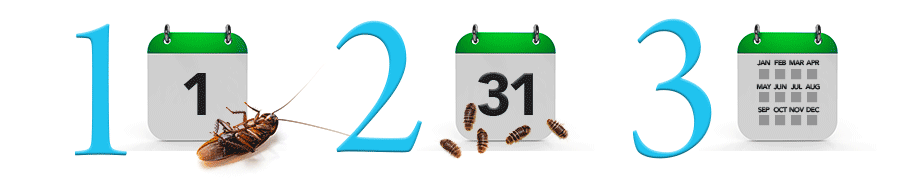 Pest Control Richmond bug cycle calendar.