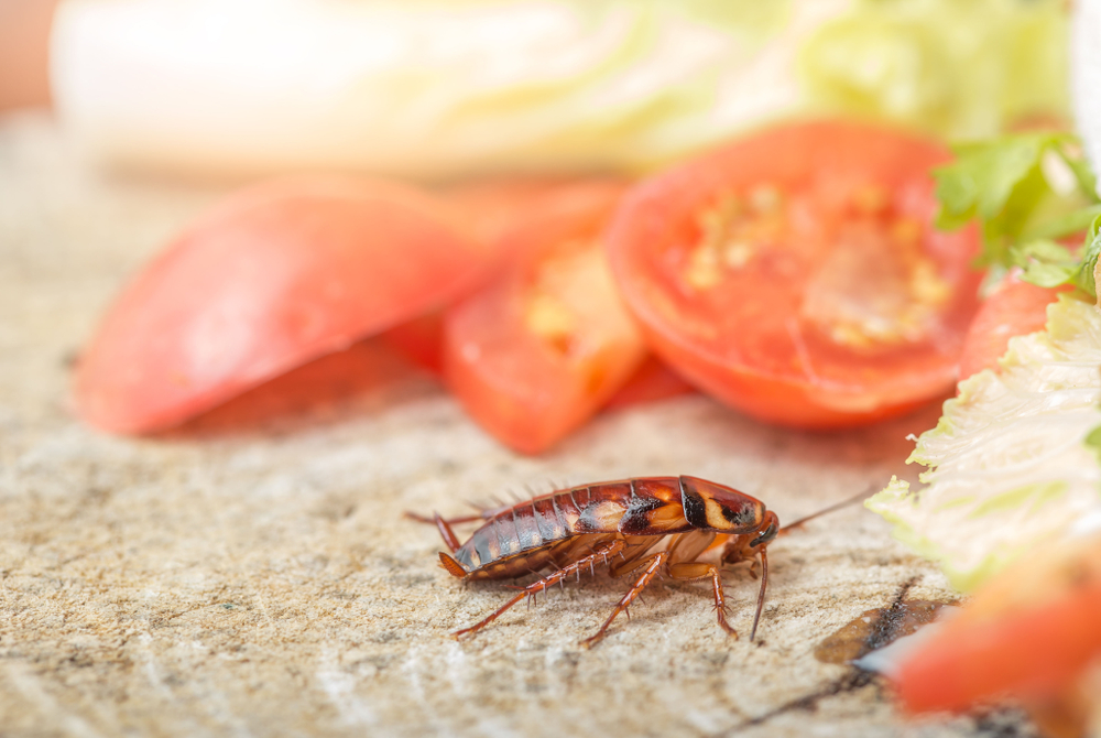 Do cockroaches trigger allergies?